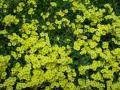 Pflanzendecke