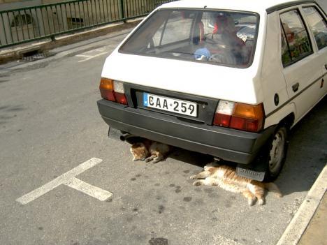 Bremsklötze?
