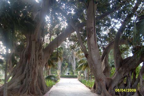 Bäume im San Anton Garden.