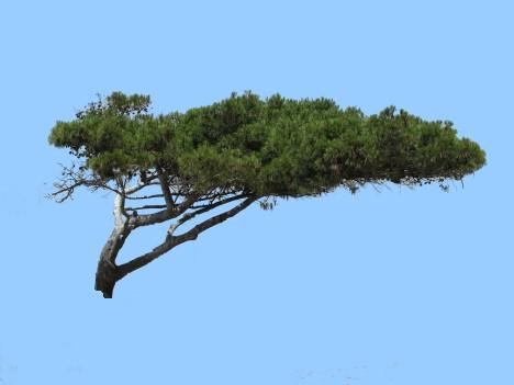 Was befindet sich hinter diesem Baum?
