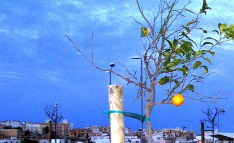 Wo wuchs diese schöne Orange mitten im Dezember?