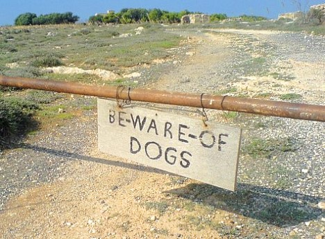 Be-ware-of-dogs!?