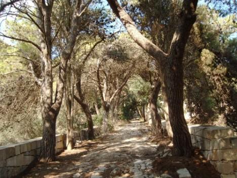 Buskett Gardens