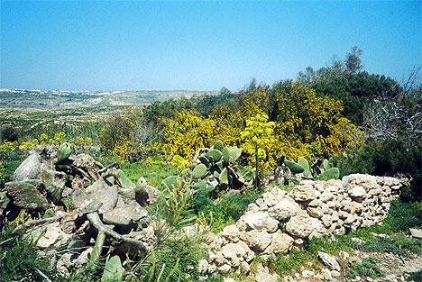 Landschaft auf Comino