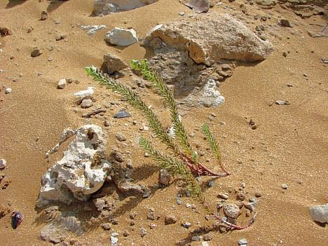 Sand und mehr in der Ramla Bay