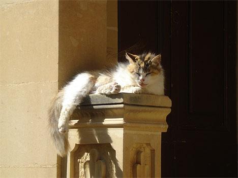 """Cat-Pillar"""