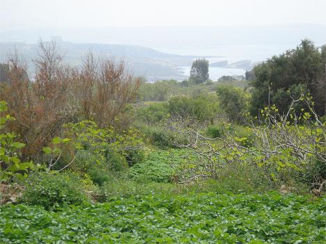 Mġarr Blick